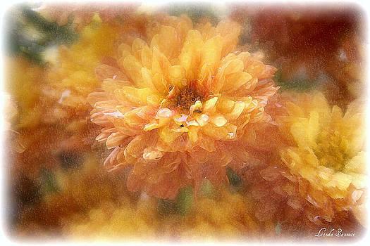 Linda Sannuti - Orange Passion