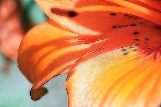 Orange Petal Dreams by Lesley Smitheringale