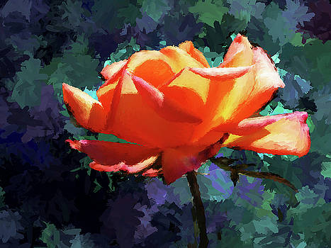 Orange Rose by Christopher Evans