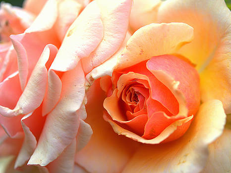 Orange Rose by Rachel Mirror