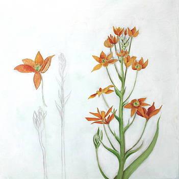 Orange Star by Genevieve Smith