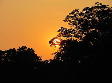 Orange Sunshine by Ginger Wemett