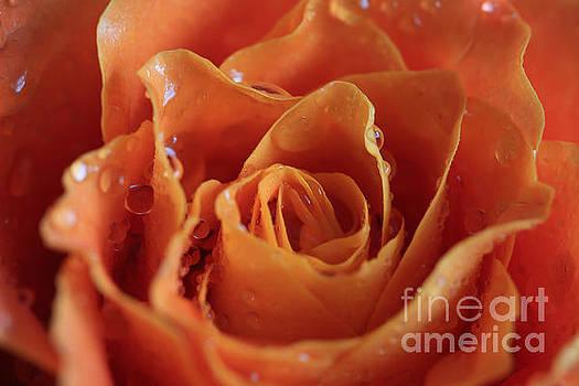 Orange by Tracy Hall
