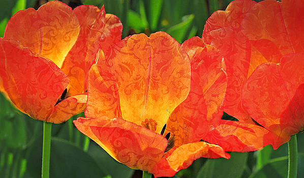 Orange Tulips with Brocade by Donna Haggerty