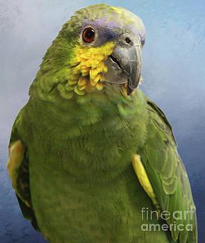 Orange Wing Amazon Parrot by Victoria Harrington