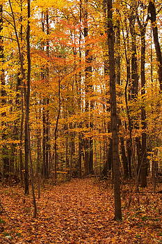 Orange Yellow Green by Amanda Kiplinger