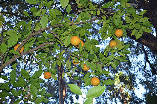 Oranges and Sky by Aimee L Maher Photography and Art Visit ALMGallerydotcom