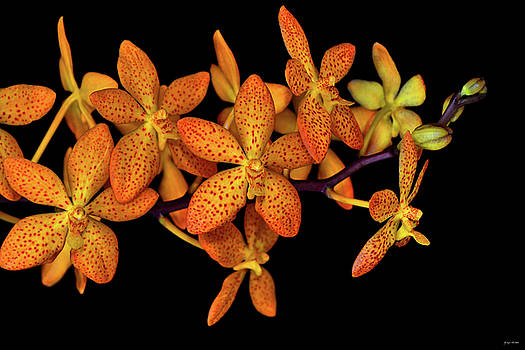 Orchid 032 by George Bostian
