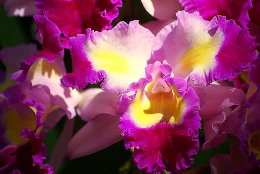 Marty Koch - Orchid 1