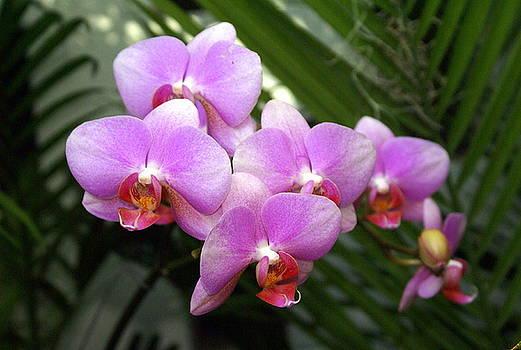 Marty Koch - Orchid 4