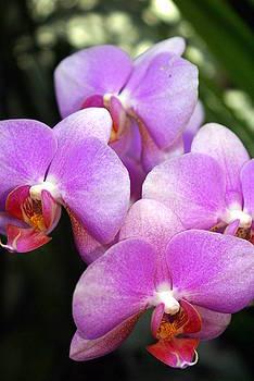 Marty Koch - Orchid 5
