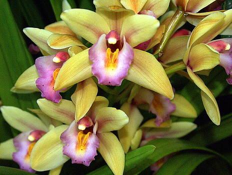 Marty Koch - Orchid 7
