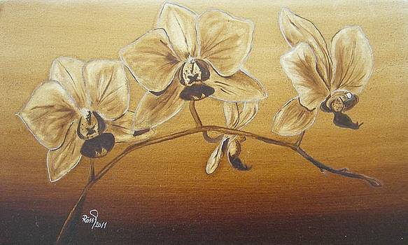 Orchid by Beata Rosslerova
