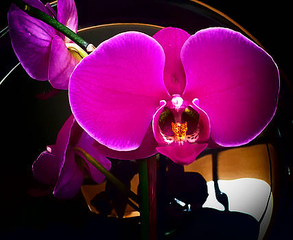 Orchid Closeup by Joseph Hollingsworth