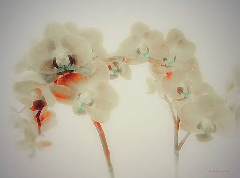Orchid Collection  ' A Touch of Color' by Gabriella Weninger - David