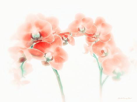 Orchid Collection 'Soft Red' by Gabriella Weninger - David