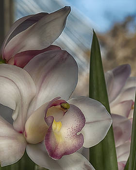 Orchid by Elaine Farrington Johnson