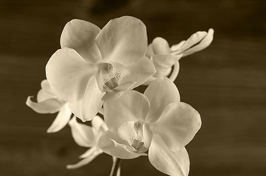 Orchid flower over wooden background. by Margaryta Vakhterova