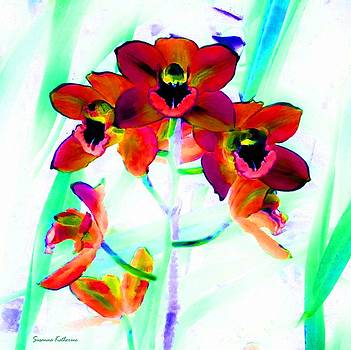 Orchid Flowers Red by Susanna  Katherine