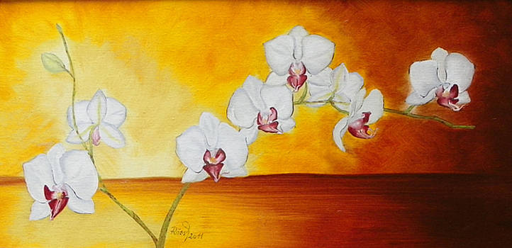 Orchid in the amber twilight by Beata Rosslerova