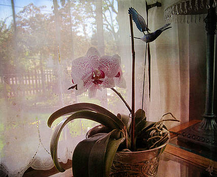 Orchid in the Window by Victoria Harrington