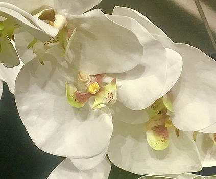 Orchid by Jeff Oates Photography