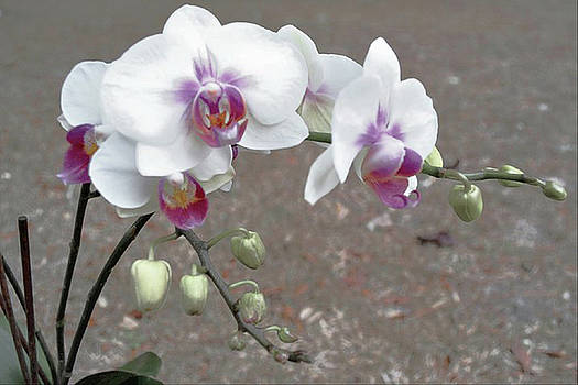 Orchid Please by Tammy  Shiver