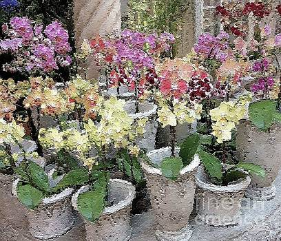 Orchid Pots by Diana Chason