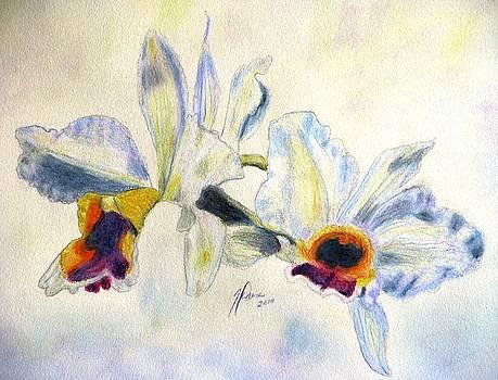 Orchid Waltz by Angela Davies