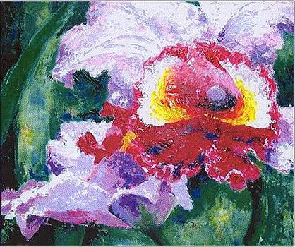 Orchid by William R Clegg