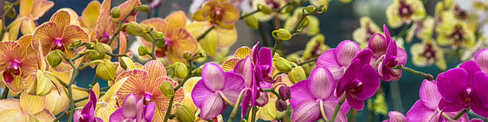 Orchids by Ed Gleichman
