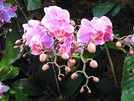 Orchids by Marsha Elliott