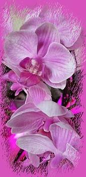 Orchids by Sandra Maddox
