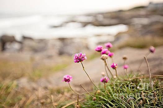 Scott Pellegrin - Oregon Coastal Clover