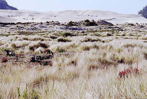 Oregon Dunes 6 by Eike Kistenmacher