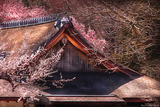 Mike Savad - Orient - Shofuso house