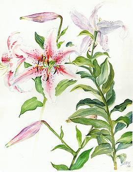 Oriental Lily mona lisa liliaceae by Sandra Phryce-Jones