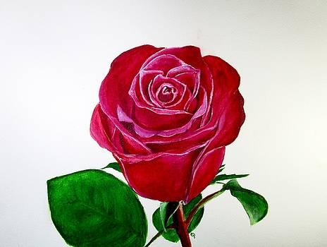 Orlando Rose by Carol Blackhurst