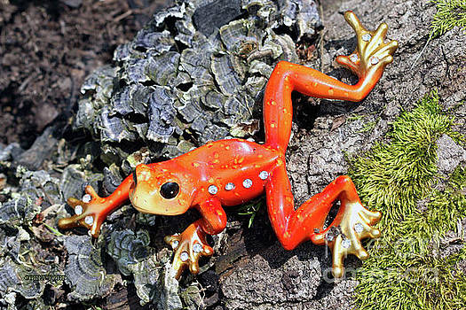 Corey Ford - Ornamental Orange Frog