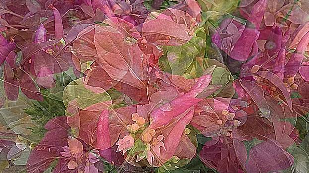 Ornamental Peppers and Hibiscus Collage by Kathy Barney