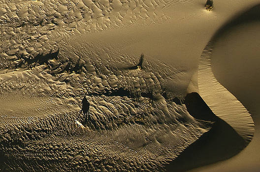 Oryx Shadow by Olwen Evans