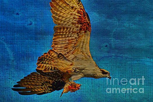 Deborah Benoit - Osprey Fish Eagle