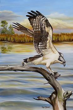 Osprey Landing by Phyllis Beiser