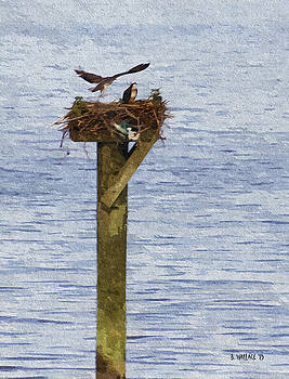 Osprey Love Nest - Oil FX by Brian Wallace