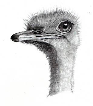 Joyce Geleynse - Ostrich Head in Pencil