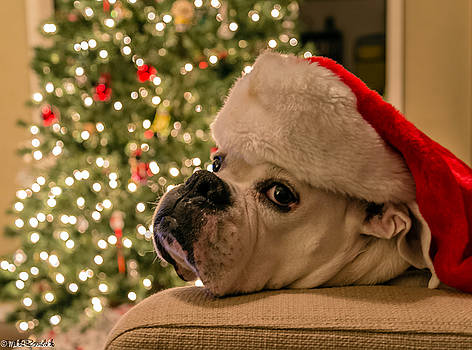 Otis Claus by Mike Ronnebeck