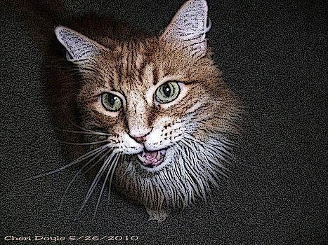 Otis the Orange Kitty by Cheri Doyle