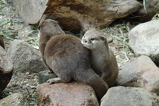 Otter by Chris Morley