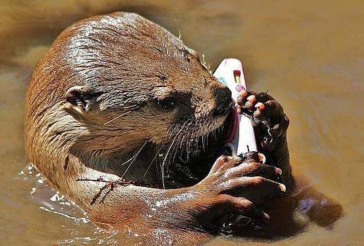 Paulette Thomas - Otter Phone Home