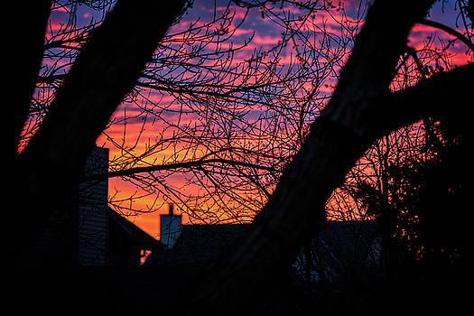 Out My Back Window by CJ Schmit